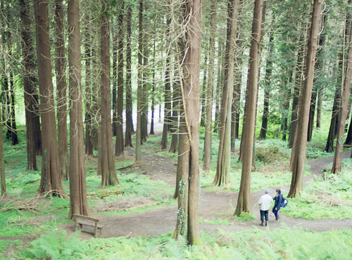 Reforestation in Ireland for recreational use