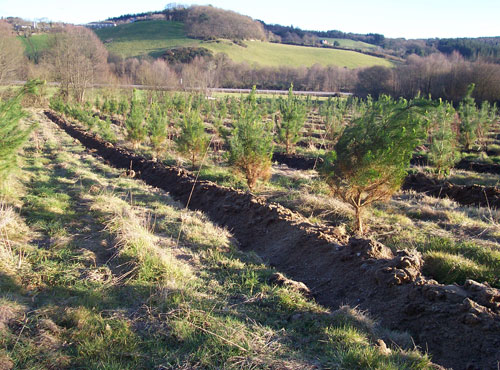 Reforestation of marginal cultivated agricultural land.
